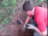 Dog Buried Alive Rescued By Firefighters
