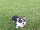 Dog Can't Catch Ball