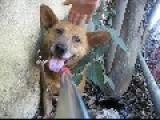 Dog Rescue: Dustin, The Abandoned Dog. By Eldad Hagar