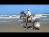 Dancing Horse Killing It