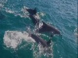 Drone Footage Shows Dolphins Frolicking Off Sydney's Northern Beaches