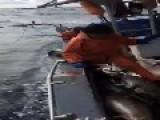 Dangle Fishing For Tuna Off Hawaii