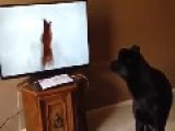 Dog Baffled By Video Of Confused Dog