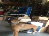 Dog Kicks Owner's Nuts