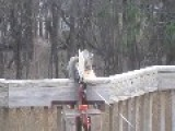 Did You Ever Wonder How To Keep Squirrels Of Your Deck?
