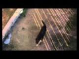 Drone Dogging