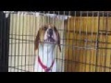 Dog Sings Along With Violin