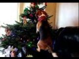 Dog Got His Own Christmas Tree Full Of Treats And Dog Toys