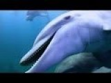 Dolphins On Drugs - Pass The Puffer!