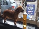 Dogs Day At The Pub - She Drinks Carling Beer Only CARLING
