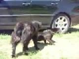 Dogs Breaks The Cat Fight