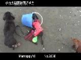 Dog Gets Stuck In Bocket