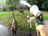 Dogs Love To Take A Drink From The Water Hose