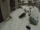 Dogs And A Big Snow Fall