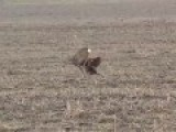 Deer Hunting With An Eagle