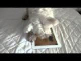 Dog Playing An IPad Game