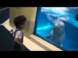 Dolphin Irrigate On Small Kid