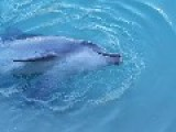 Dolphin Struggles To Keep His Tongue To Himself