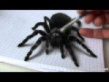 Draw A Spider In 3D, Realistic