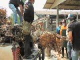 Dog Meat Trade In Thailand Is Under Pressure And May Be Banned