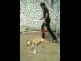 Dog Shock