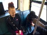 DOG Rides BUS To A DOG PARK = By Itself = Dogs Are Awsome =