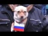 Dog-'Separatist' In Lugansk
