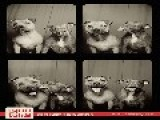 Dogs In A Photo Booth