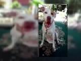 Dog Death In Olean. Wife Poisons Husbands Dog For Revenge