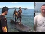 Diver Saves Baby Whale Shark By Buying It Off Indonesian Fisherman