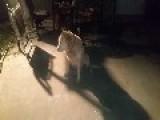 Dakota Can Catch Anything. Long Catch