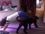 Dog Wants To Join Owner's Yoga Party