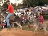 Donkey Race With An Unexpected Ending