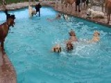 Dogs Love To Splash Around At Puppy Pool Party