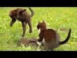 Dancing Kittens - Cute Fighting In Slow Motion Part 2