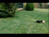 Dog Sports Compilation