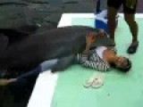 Dolphin Humps The Women Lol