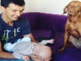 Dog Gets Jealous Of Owners' Infant Son