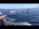 Dolphin Surfing, Woman Wakeboarding With Dolphins As Seen On TV WORLDWIDE!!