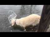 Dog Uses Bait To Catch A Fish