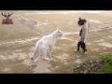 Duel Between 2 Cats + Surprising+funny End