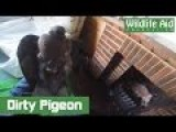 Dirty Rescue Of A Pigeon Stuck In A Chimney