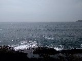 Dolphins Put On Display At Inchydoney Island, Ireland