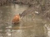 Dog And Deer, Zero F*cks Given By Dog