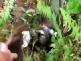Dude Saves Cat From Snakes Stranglehold
