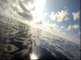 Dolphins Swimming Filmed With GoPro Hero3+ Silver And Underwater Footage