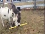 Donkeys Want To Play Wiffle Ball
