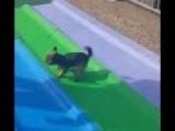 Dog Loves The Slide