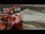 DRT 223 Elite Ammo Vs Bone Meat Gel In Slow Motion