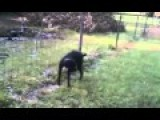 Dog Pee On Electric Fence